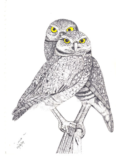 ../../images/drawings/sketches/burrowing_owl_pair.png