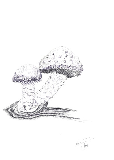 ../../images/drawings/sketches/mushroom.png